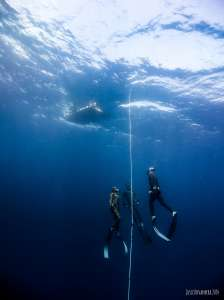 Freediving Level 3 in Cebu, Philippines