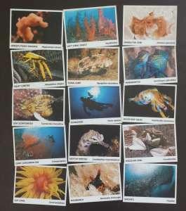 Scuba Diving Cebu