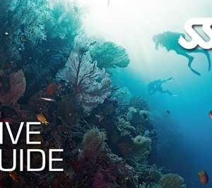 Dive Guide Specialty Course at Kasai Village Dive Centre