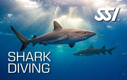 Shark Diver at Kasai Village Dive Resort